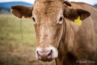 Xandre Verkes - Cattle Farm-5