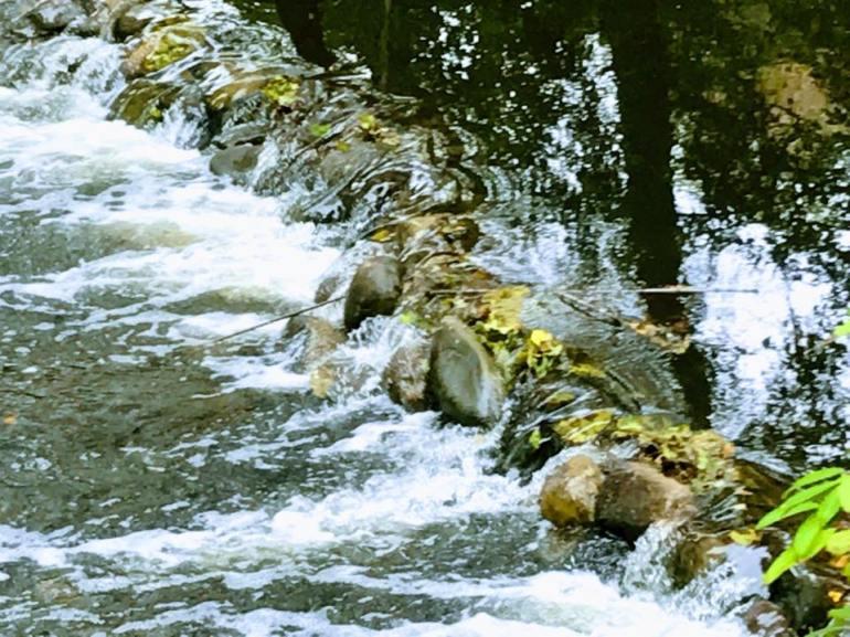 running creek