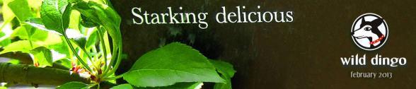 header-2013-02- Starking Delicious!