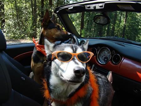 juno-orange-shades