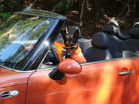 loki-orange-shades-look