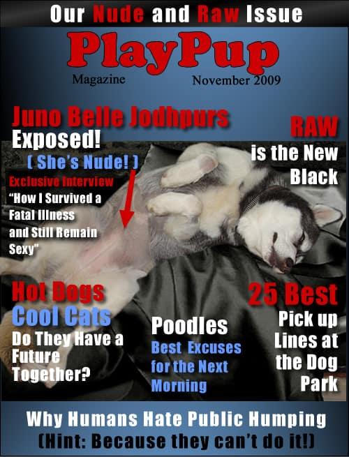 play-pup-magazine3