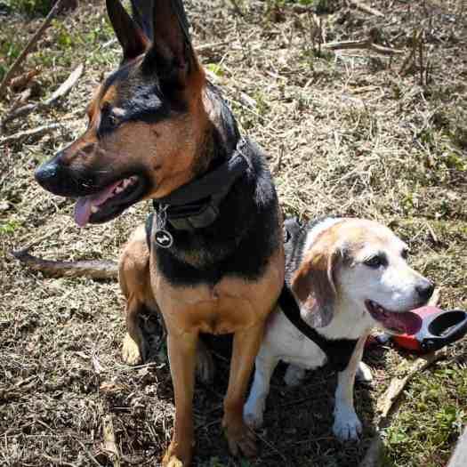 Best pals, Loki and Mona