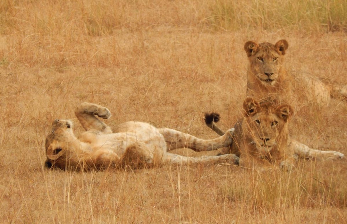 Queen Elizabeth National Park Savanna Safari
