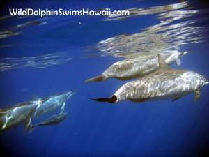 Dolphin Facts 16