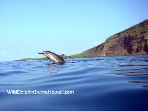 Dolphin Facts 2
