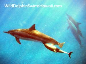 Dolphin Facts 17