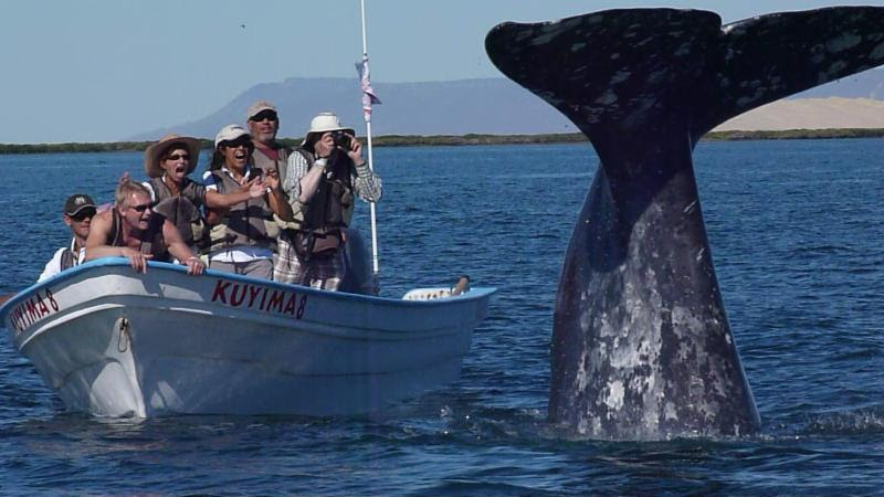 Gray Whale Baja Gratitude Retreat Trip