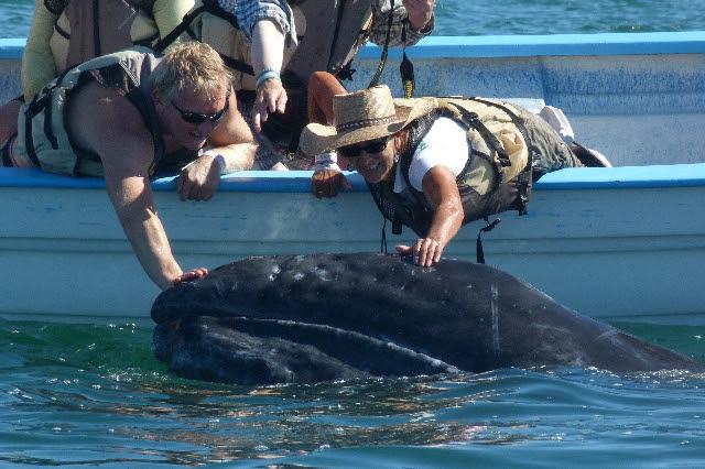 Gray Whale Trip Baja, Mexico