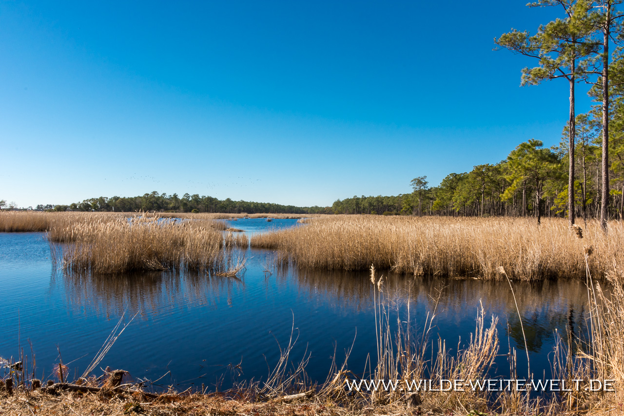 Santee Coastal Reserve und Francis Marion National Forest