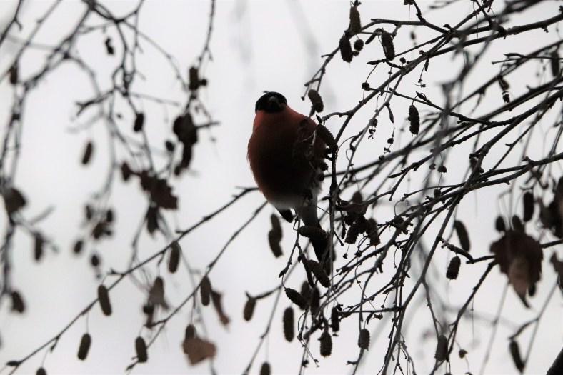 Die Singvögel am Berg