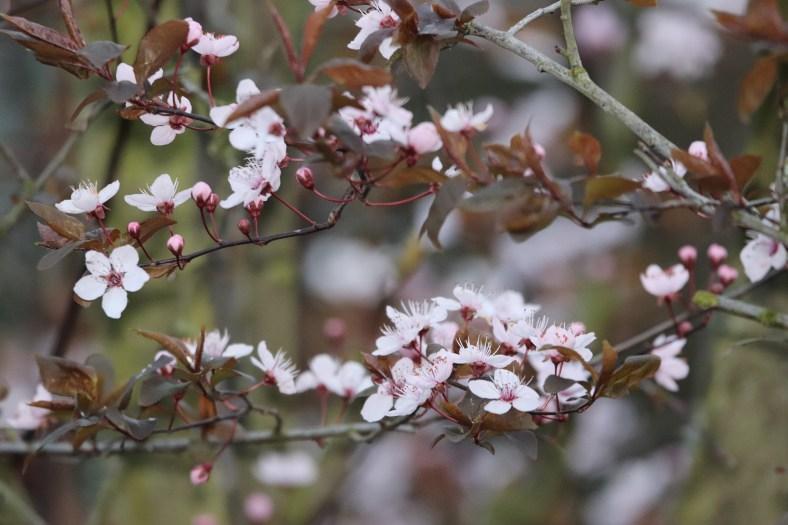 Der kalendarische Frühlingsanfang