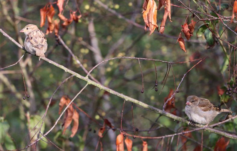 Die Hecken sind wichtige Lebensräume unserer Vögel