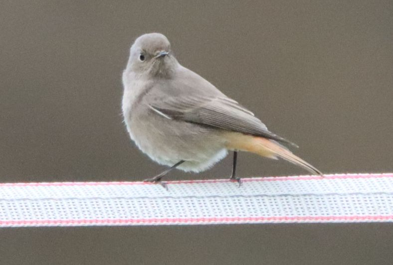 Die letzten Vögel des Sommers