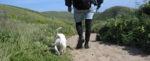 Leash laws and enclosed off-leash play areas are essential safeguards for us all.