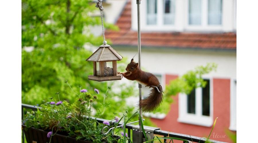 Das Eichhörnchen futtert nur Bio!