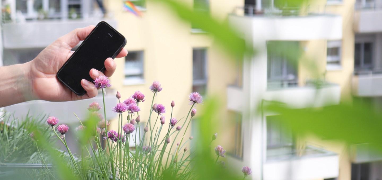 Vogelstimmenhotline: Tipps für den Balkon