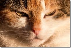 cat-667909