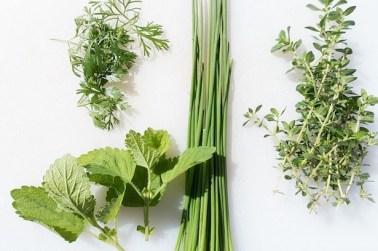 Best Winter Herbs
