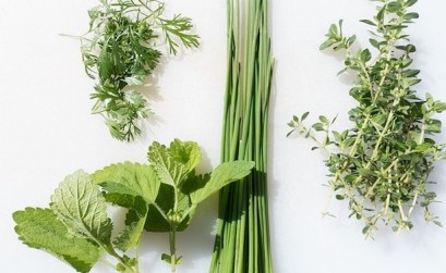 Best Winter Herbs