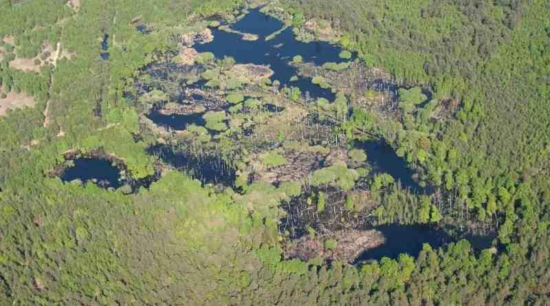 brandenburg-wilderness-foundation-4.jpg - © European Wilderness Society CC BY-NC-ND 4.0