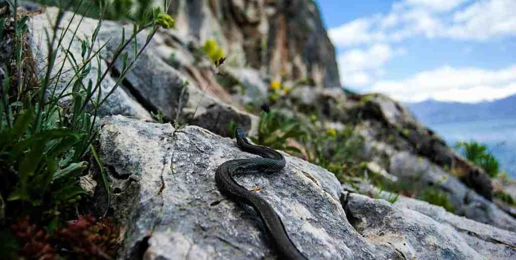 Prespa National Park joins European Wilderness Preservation System