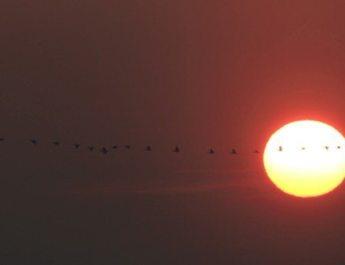 Massive Cranes Spring Migration, Slovakia