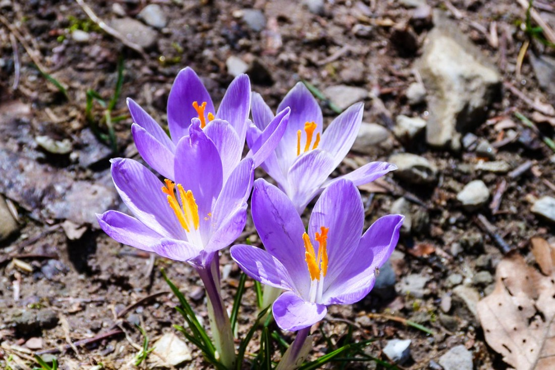 Flowers in the Park.jpeg - © European Wilderness Society CC BY-NC-ND 4.0