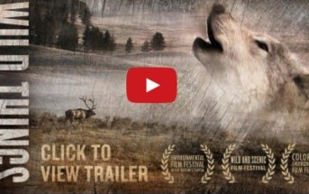 Wild things: a documentary on the coexistence of ranchers and carnivores
