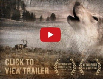 wild-things-a-documentary-on-the-coexistence-of-ranchers-and-carnivores