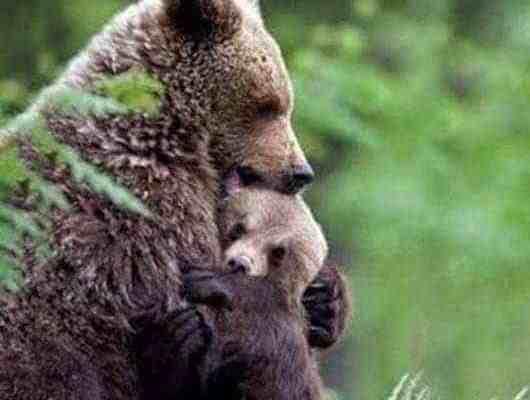 Bears and human coexistence