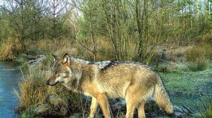 Wilderness assessment in Königsbrücker Heide