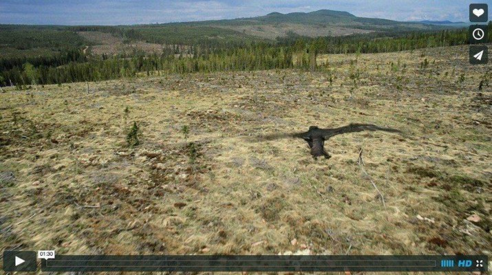 sweden-s-old-growth-forests-threathened-by-clear-cutting
