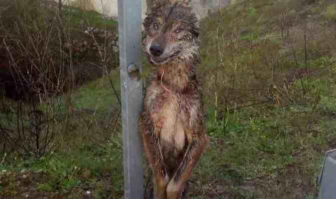 cruel-wolf-kills-across-europe
