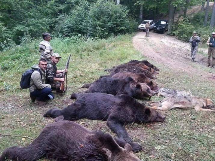 Hunters at work - stop brown bear killing!