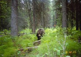 Italy kills another 'problem' bear in Trentino