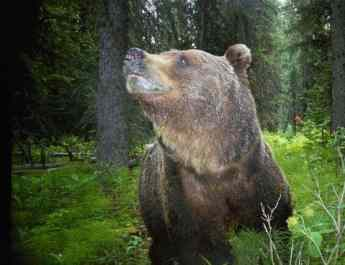 Why should we protect bears?