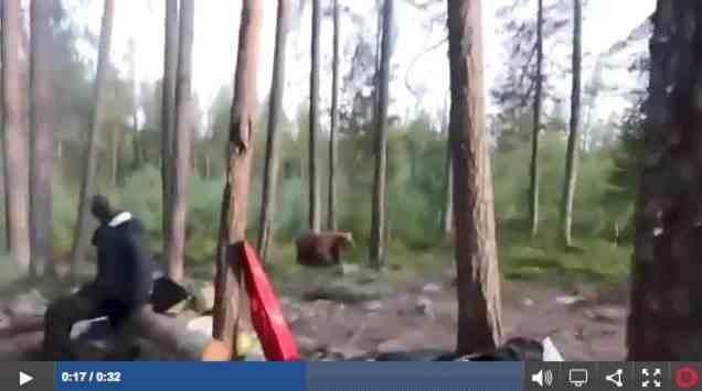 Singing the bear away