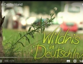 WIlderness film Germany