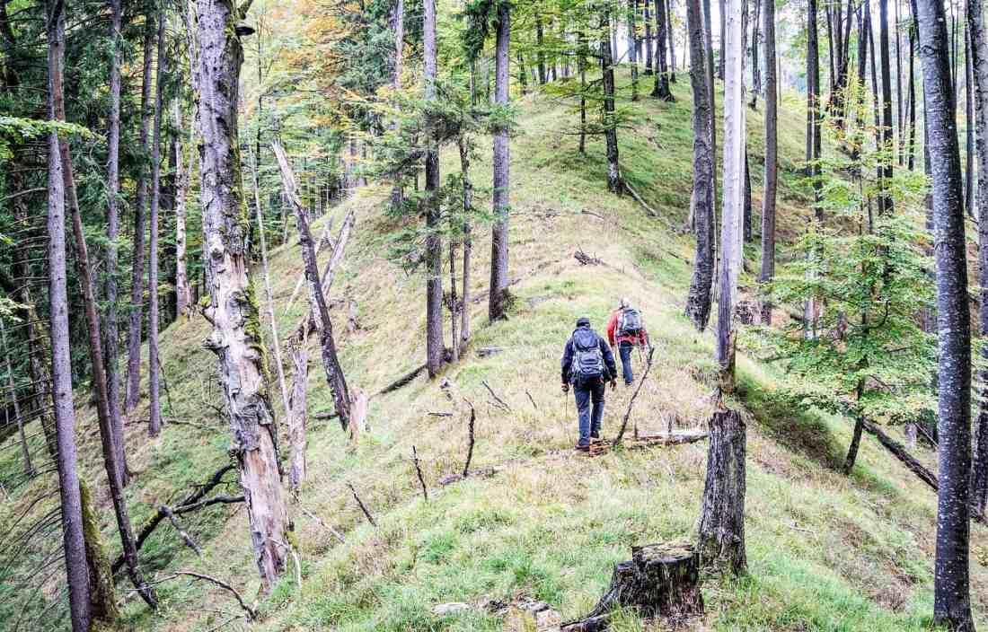 WIlderness Exchange Programme Kalkalpen 33.jpg - © European Wilderness Society CC BY-NC-ND 4.0