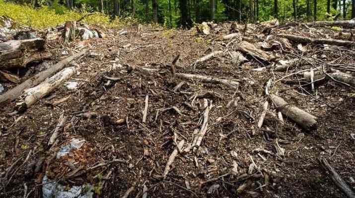 Threat: Romanian Cosava Virgin Forest