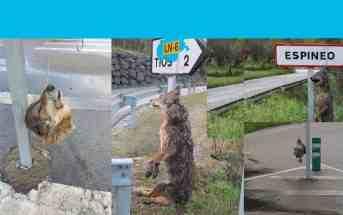 Indiscriminate killing of wolves in Asturias, Spain