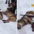 Poachers killing Wolves in the Kosovo