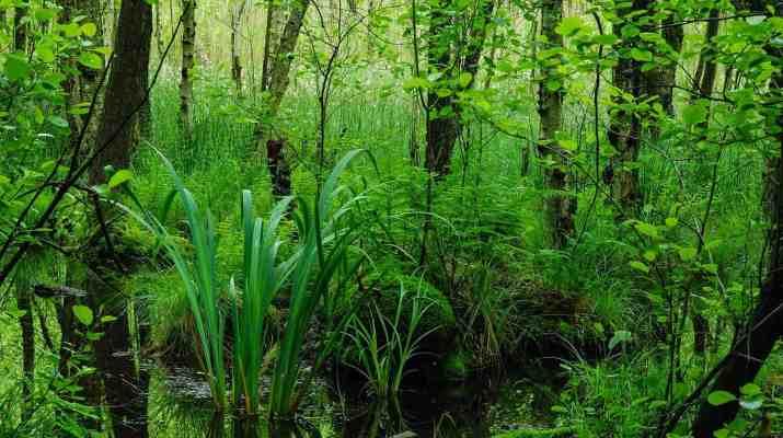 Biosphere Reserve Schorfheide Wilderness - © All rights reserved
