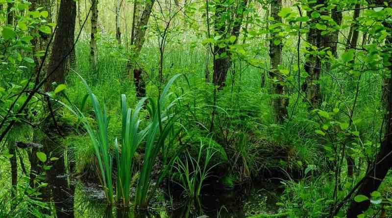 Biosphere Reserve Schorfheide Wilderness 0036.JPG - © European Wilderness Society CC BY-NC-ND 4.0