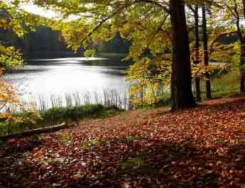 EWS - Biosphere Reserve Schorfheide Wilderness -00650_