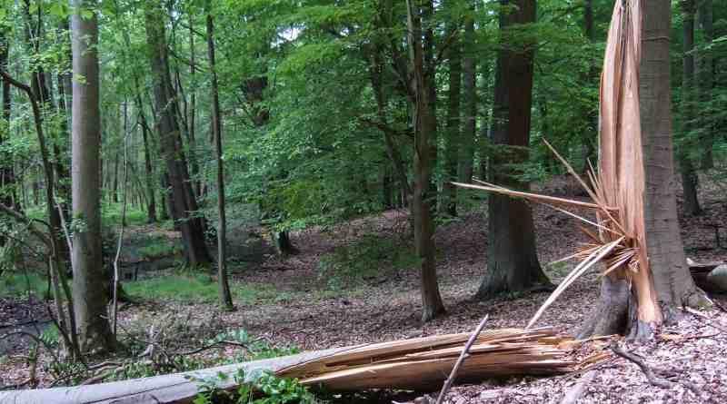 Biosphere Reserve Schorfheide Wilderness 0011.jpg - © European Wilderness Society CC BY-NC-ND 4.0