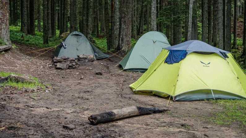Carpathian National Park 1252