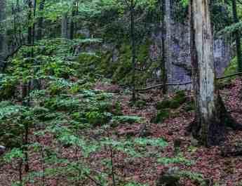 EWS - Uholka Sirokyy Luh Wilderness Exchange Programme -11871_