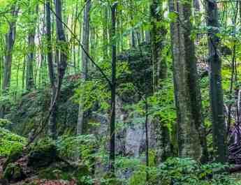 Uholka Wilderness Exchange Programme - 00042.jpg - European Wilderness Society - CC NonCommercial-NoDerivates 4.0 International